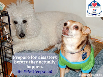 CarmaPoodale and ScoobyDoo want to know if you have a emergency kit for pets