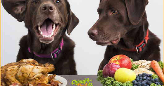 HOW TO BEGIN A VEGAN DOG FOOD DIET