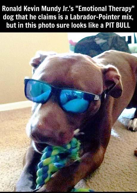 Delta Service Dog Maul