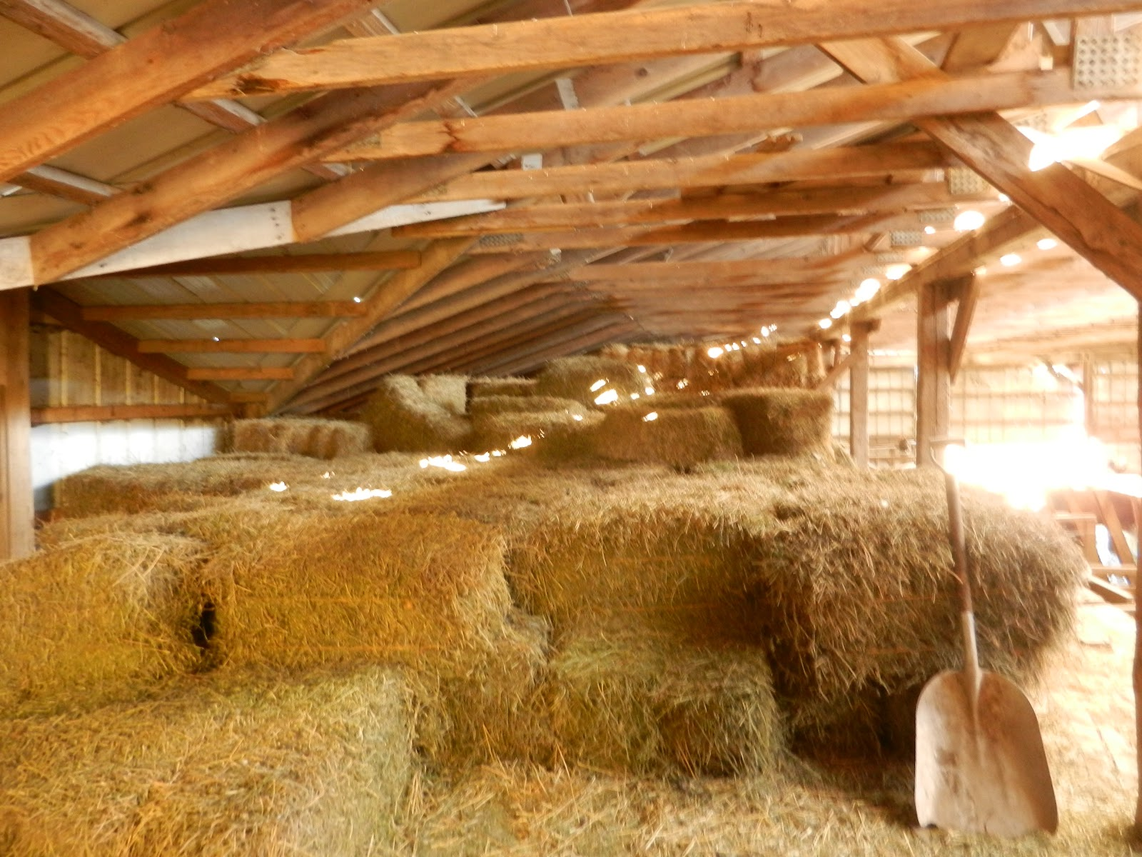 Tiny Home Designs: The Midlife Farmwife: Barn-chitecture