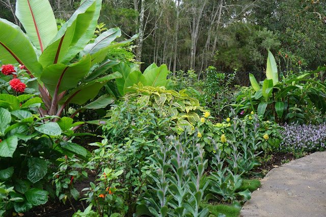 tropical%2Bgardens2_peter%2Bnixon.jpg