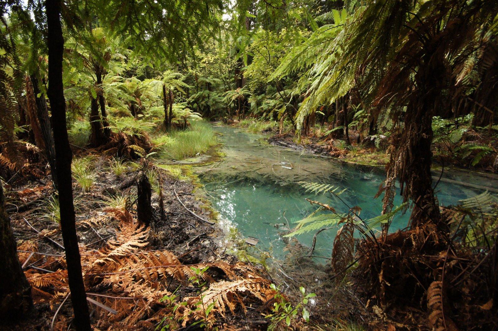Magi And Sam Rotorua The Redwoods Whakarewarewa Forest