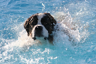 doggy paddle swimming