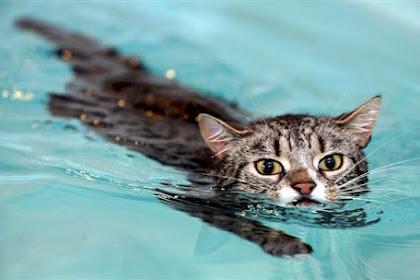 Cara Memandikan Kucing   Tips dari Kami Pecinta Kucing