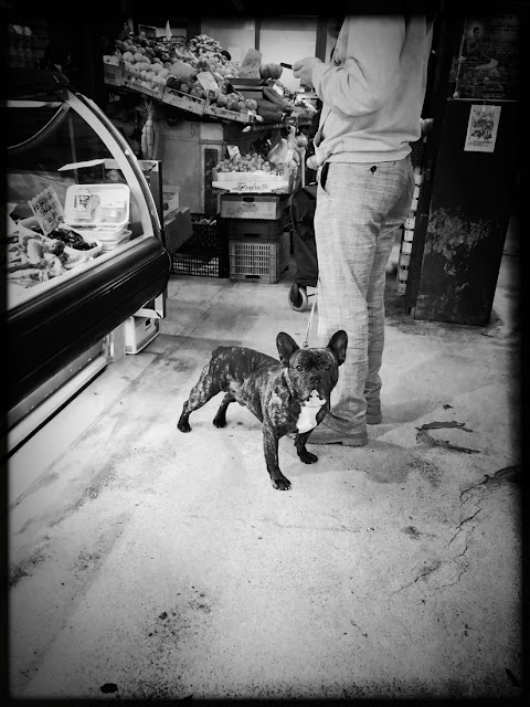 Dogs of Florence, dogs, Florence, Italy, canines, travel, French Bulldog, Mercato Centrale