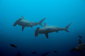 Shark Week Activities Education Resources
