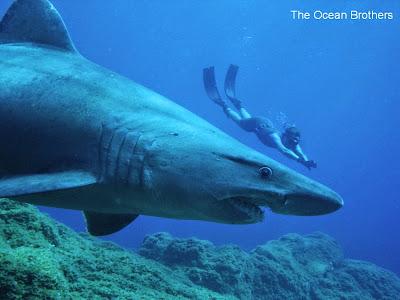 Hai beim Tauchen auf El Hierro
