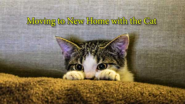 moving to new home with a cat