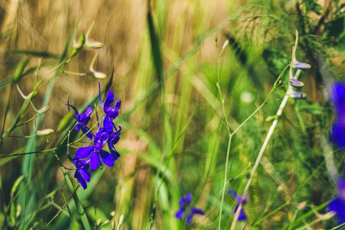 field ukraine village countryside sunlight summer flower