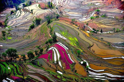 Colorful Terraces