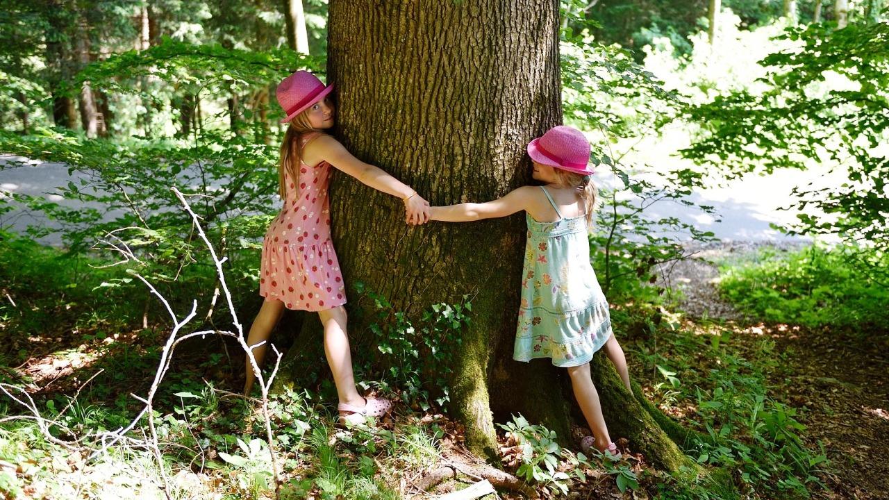Asturias verde equo contra la tala de rboles en parques for Tala de arboles madrid