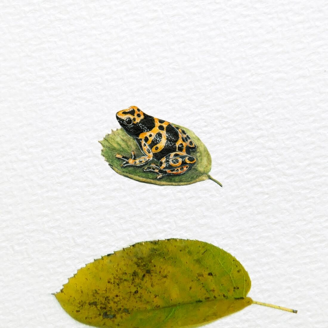 08-Yellow-Banded-Poison-Dart-Frog-Frank Holzenburg Miniature Drawings and Paintings of Animals-www-designstack-co