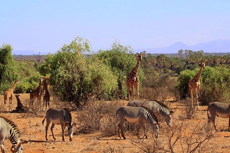 Reserva Nacional de Samburu en Kenia