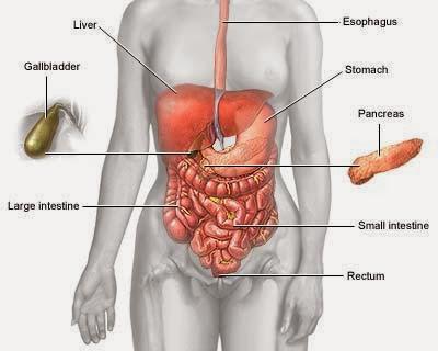 Pengobatan Penyakit Kanker Usus Besar Secara Alami