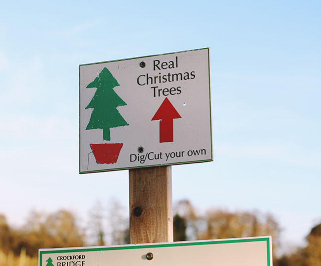Dig cut your own Christmas tree farm