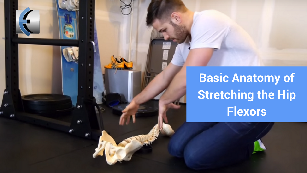Basic Anatomy of Stretching the Hip Flexors | Physio Answers