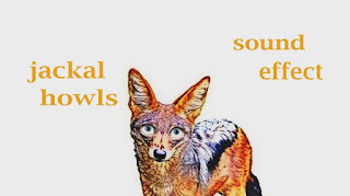 sound of jackal