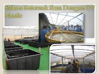 Sukses Beternak Ikan Dengan UV Plastic