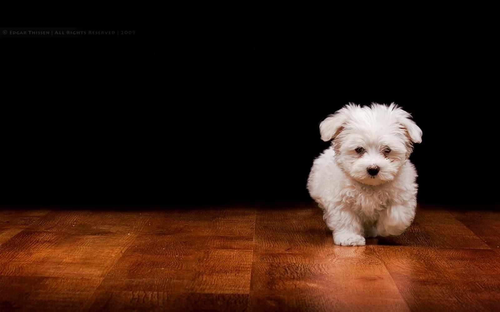 Imágenes De Animales En Hd Para Fondo De Pantalla: Fondo De Pantalla Animales Perro Blanco