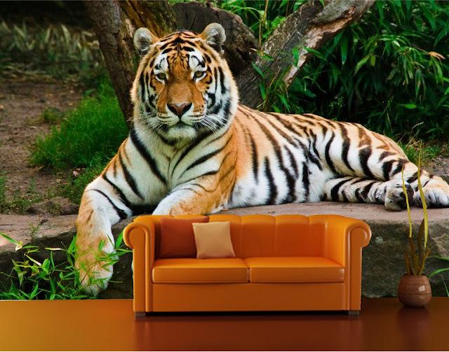 tapet tiger liggandes vardagsrum
