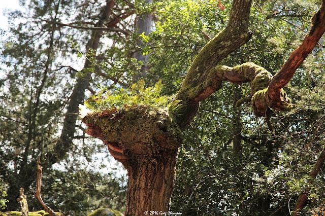 Bois de cref ? Cuvier Fontainebleau (C) 2016 Greg Clouzeau