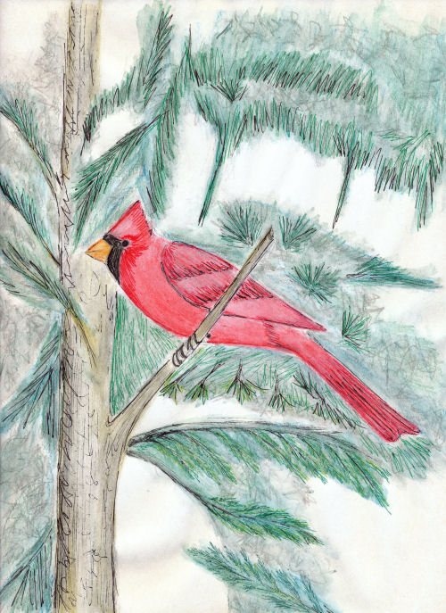 drawing of a cardinal