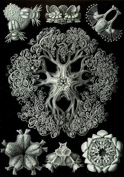 Unus Mundus Ernst Haeckel