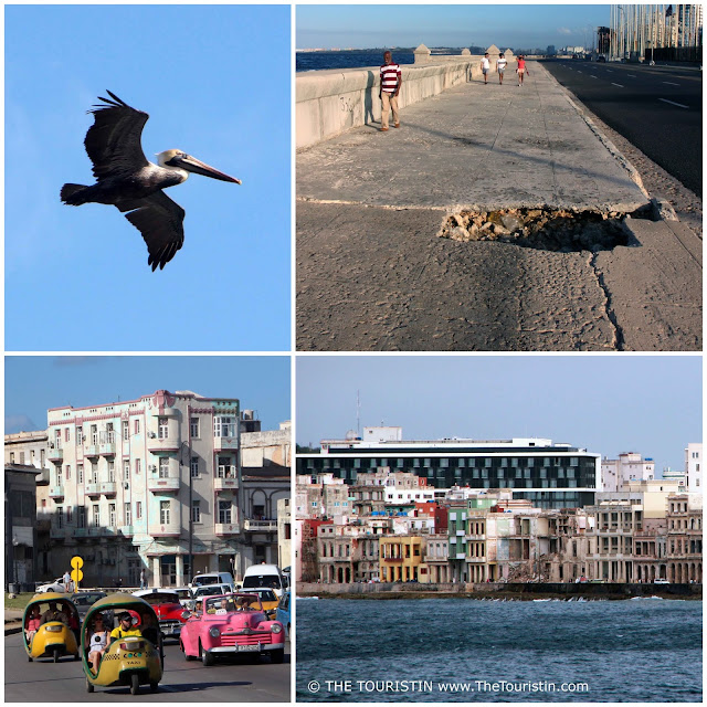 malecon havana pelican potholes ruins street of florida ocean