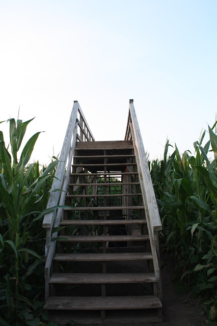 Bridge in the Richardson Corn Maze