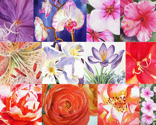 Close Up Paintings of Watercolor Flowers