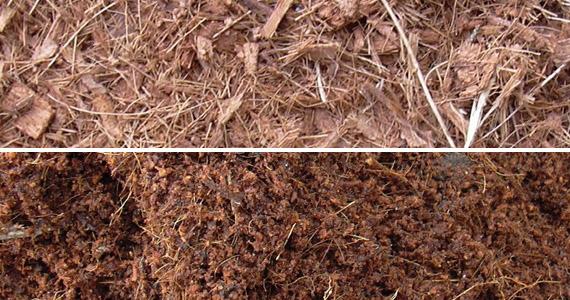 fibra de coco y humus de lombriz