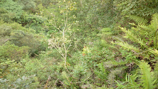 Foto floresta - Regime de Proteção da Reserva Legal