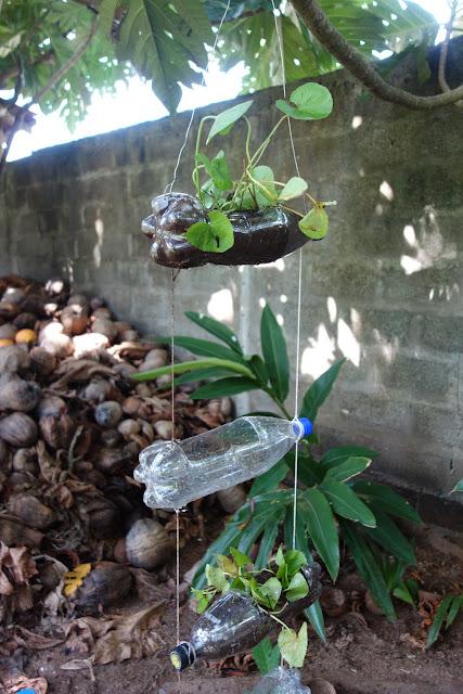 bottle, bottlewall, green, homegardening, gardening ideas, vertical garden, garden wall