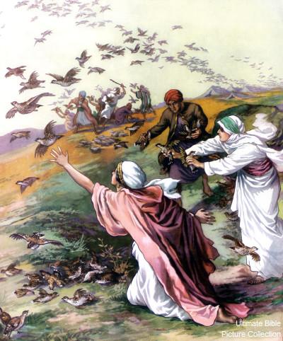 "Image result for 的耶和华,在祂面前哭号说:我们为何出了埃及呢!""【民11: 20】"