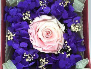 mawar merah muda dengan warna kontras bunga hortensia