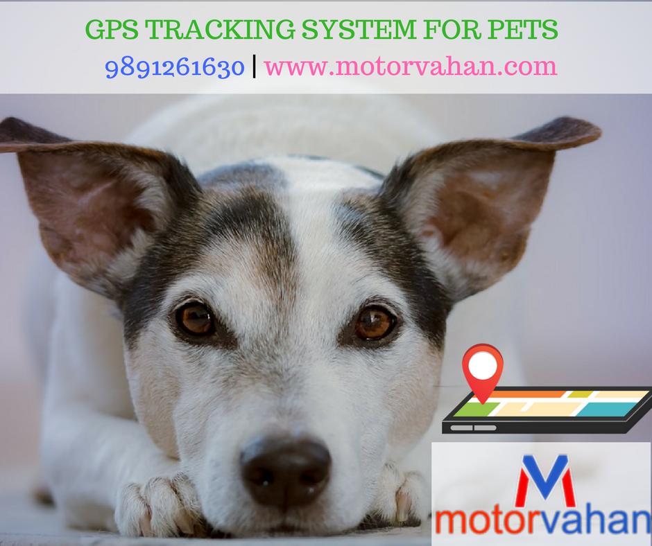 Best Dog Gps Tracker India