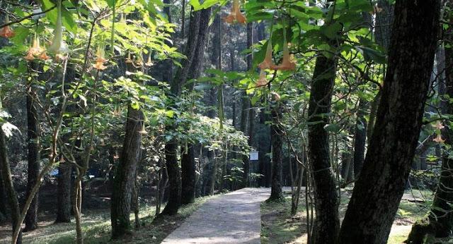 Taman-Hutan-Raya-Juanda-Bandung