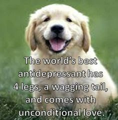 inspirational words: the world's best antidepressant has 4 legs,