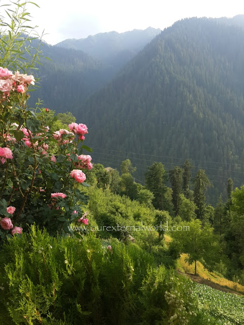 Himalayas, Shoja