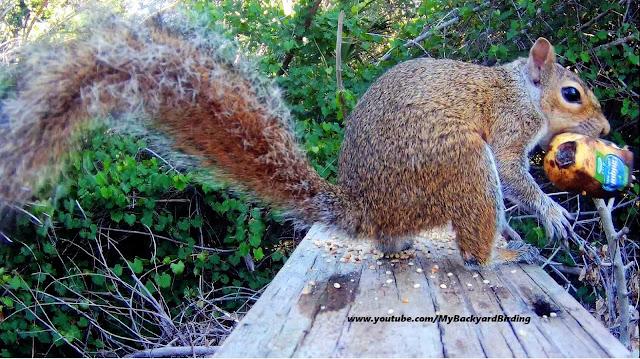 Squirrel Steals Chiquita Organic Bananas