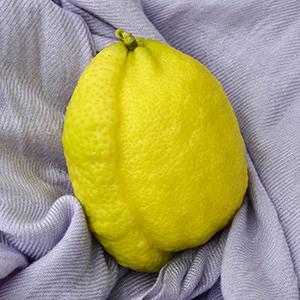 Lemon 02