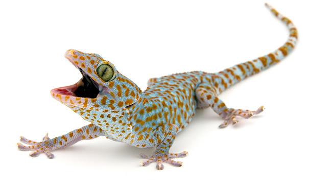pasir zeolit untuk gecko