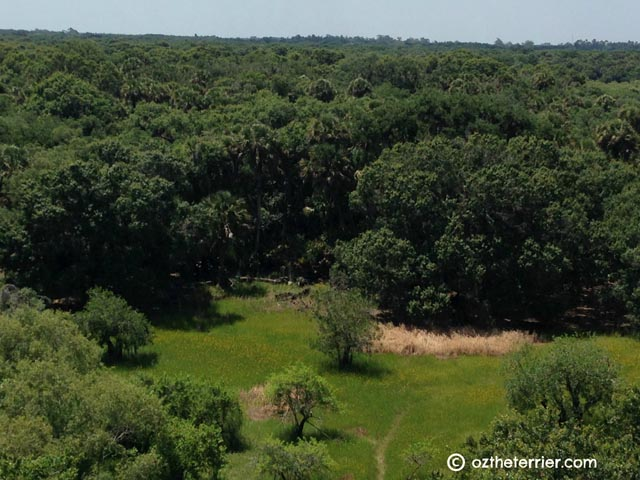 view of oak/palm hammock from myakka river canopy trail