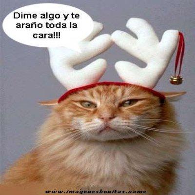 Imagenes Chistosas De Navidad Con Frases Imágenes Con Frases