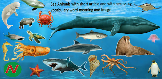 Sea Animals Name with Necessary Vocabulary [English Word Meaning & Pictures]