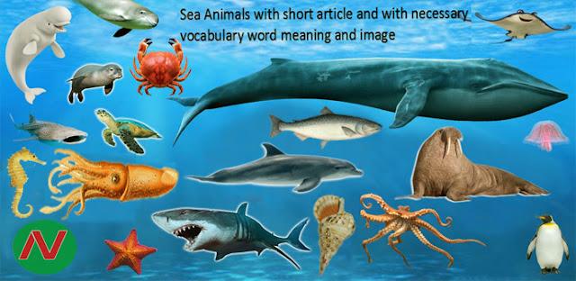 sea animals, ocean animals name, marine animals