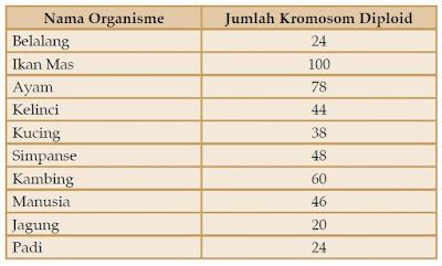 Jumlah Kromosom pada Manusia dan Makhluk Hidup Lainnya