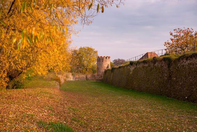 Fortifications de Bergheim (Alsace). Front nord - tour semi-circulaire adaptée à l'usage des armes à feu.