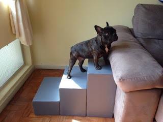 escadas para cães em sofás