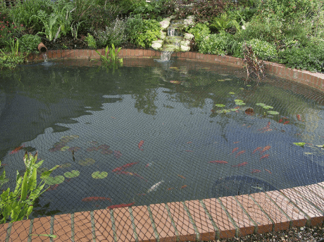 kolam ikan minimalis terbaik untuk ikan hias kamu   hewan